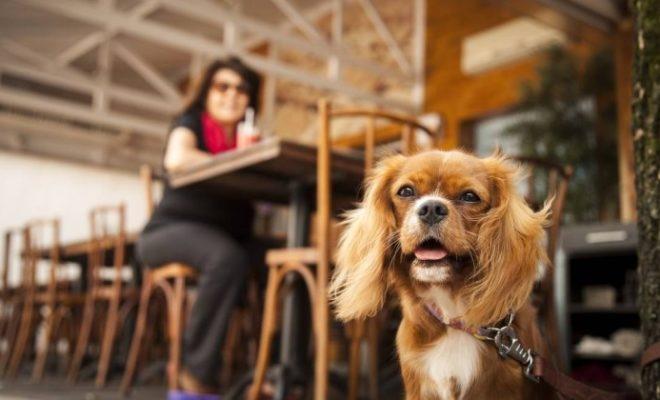 Confira os principais cuidados para aproveitar a folia com seu pet